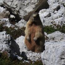 Cortina d'Ampezzo 2015 - 03.07.2015