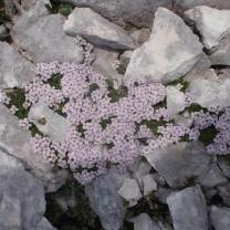Vrsic - 06.07.2010_600